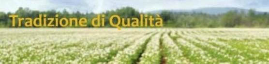"""F.lli Torti: """"Quotazioni soddisfacenti sul mercato di patate e cipolle, speriamo che duri"""""""
